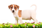 PUP 14 JE0016 01