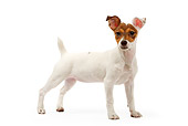 PUP 14 JE0023 01