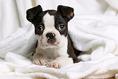 PUP 14 JE0025 01