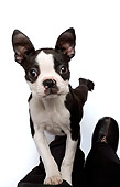 PUP 14 JE0027 01