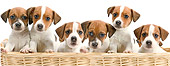 PUP 14 JE0028 01