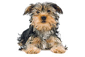 PUP 14 JE0030 01