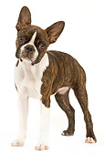 PUP 14 JE0032 01