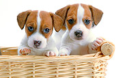 PUP 14 JE0035 01