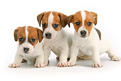 PUP 14 JE0036 01
