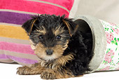 PUP 14 JE0043 01