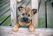 PUP 14 JN0002 01