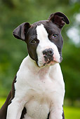 PUP 14 JS0002 01