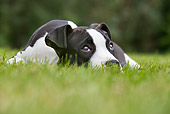 PUP 14 JS0003 01
