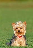 PUP 14 KH0007 01