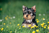 PUP 14 KH0008 01