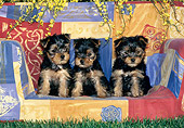 PUP 14 KH0010 01