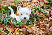 PUP 14 LS0003 01