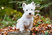 PUP 14 LS0005 01