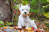 PUP 14 LS0006 01