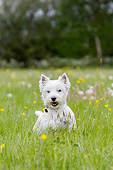 PUP 14 NR0004 01