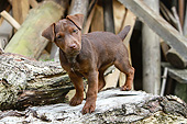 PUP 14 NR0006 01