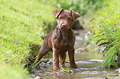 PUP 14 NR0008 01