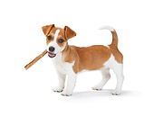 PUP 14 PE0001 01