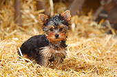 PUP 14 PE0005 01