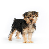 PUP 14 RK0079 01