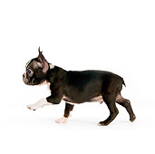 PUP 14 RK0084 01