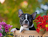 PUP 14 RK0088 01