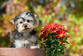 PUP 14 RK0091 01