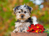 PUP 14 RK0093 01