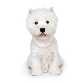 PUP 14 RK0099 01