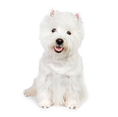 PUP 14 RK0100 01