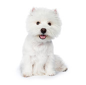 PUP 14 RK0101 01