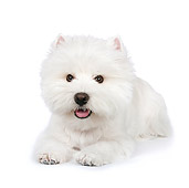 PUP 14 RK0102 01