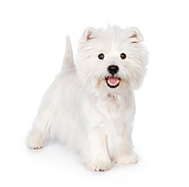PUP 14 RK0107 01