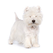 PUP 14 RK0108 01