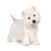 PUP 14 RK0109 01