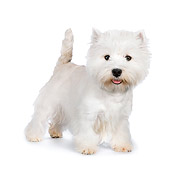 PUP 14 RK0110 01