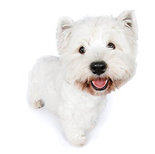 PUP 14 RK0113 01