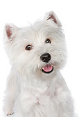 PUP 14 RK0117 01