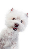PUP 14 RK0118 01