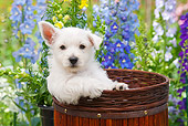 PUP 14 RK0120 01