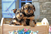 PUP 14 SJ0001 01