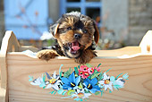 PUP 14 SJ0003 01