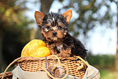 PUP 14 SJ0005 01