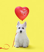 PUP 14 XA0008 01