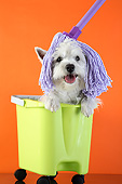 PUP 14 XA0009 01