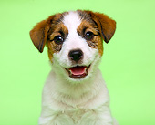 PUP 14 XA0010 01