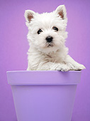PUP 14 XA0012 01