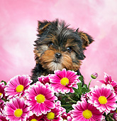 PUP 14 XA0016 01