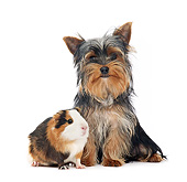 PUP 14 XA0018 01
